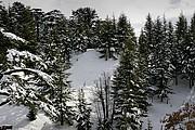 Valle de Quadisha, Valle de Quadisha, Libano