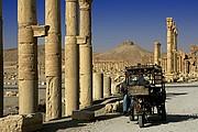 Palmira, Palmira, Siria