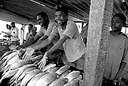 Mercado de Peces, Costa do Sol, Mozambique