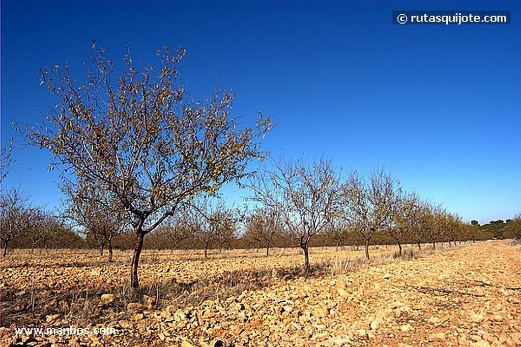 Munera Albacete