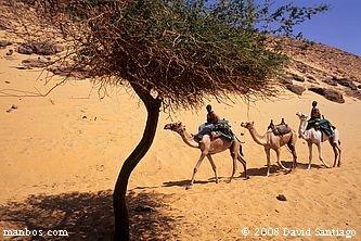 Travesia en camello