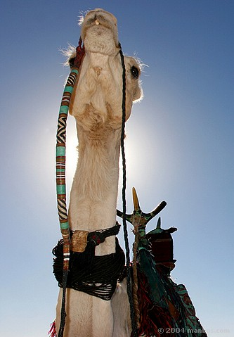Camelleros en Tamansrasset