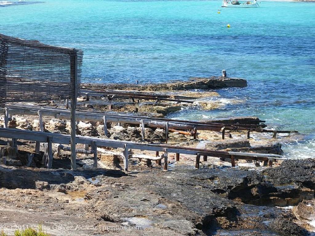Formentera Gaviota en vuelo. Islas Baleares