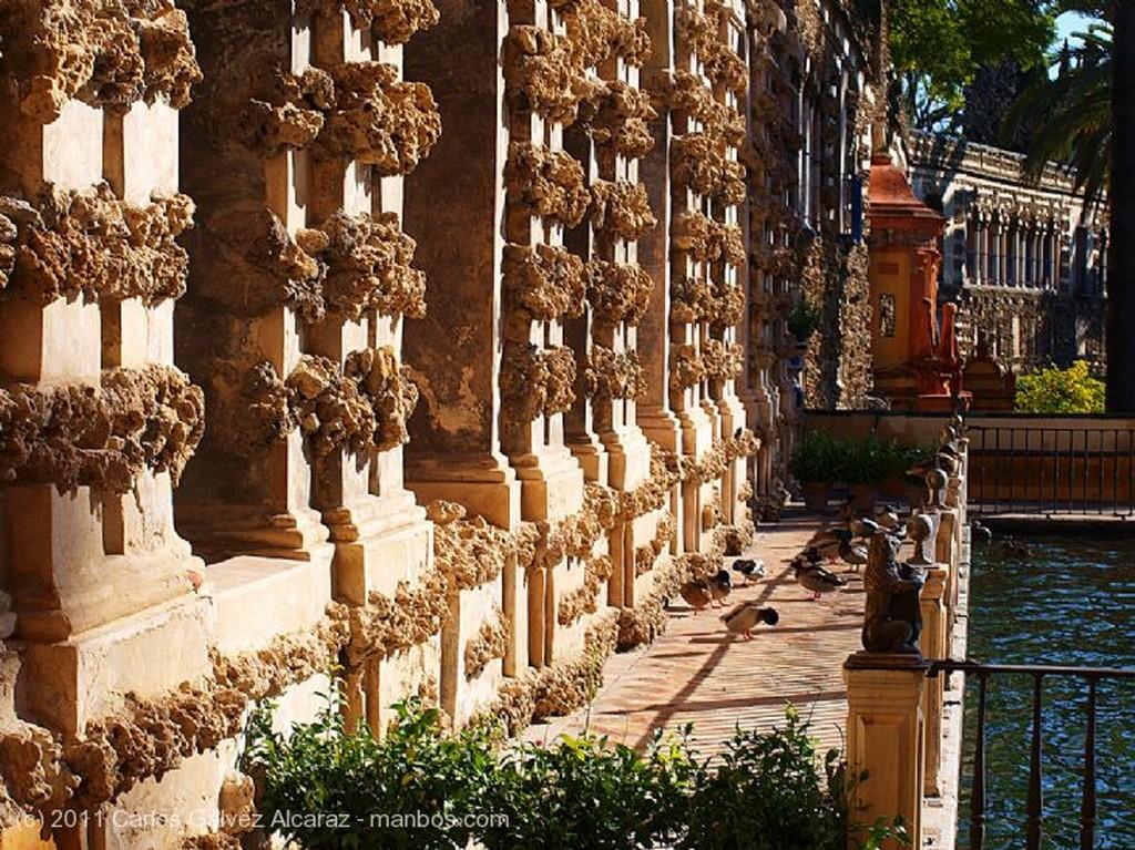 Sevilla Patio. Sevilla