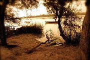 Camara Canon EOS 50D arbol caido Felipe Baldovi Borras CULLERA Foto: 17887