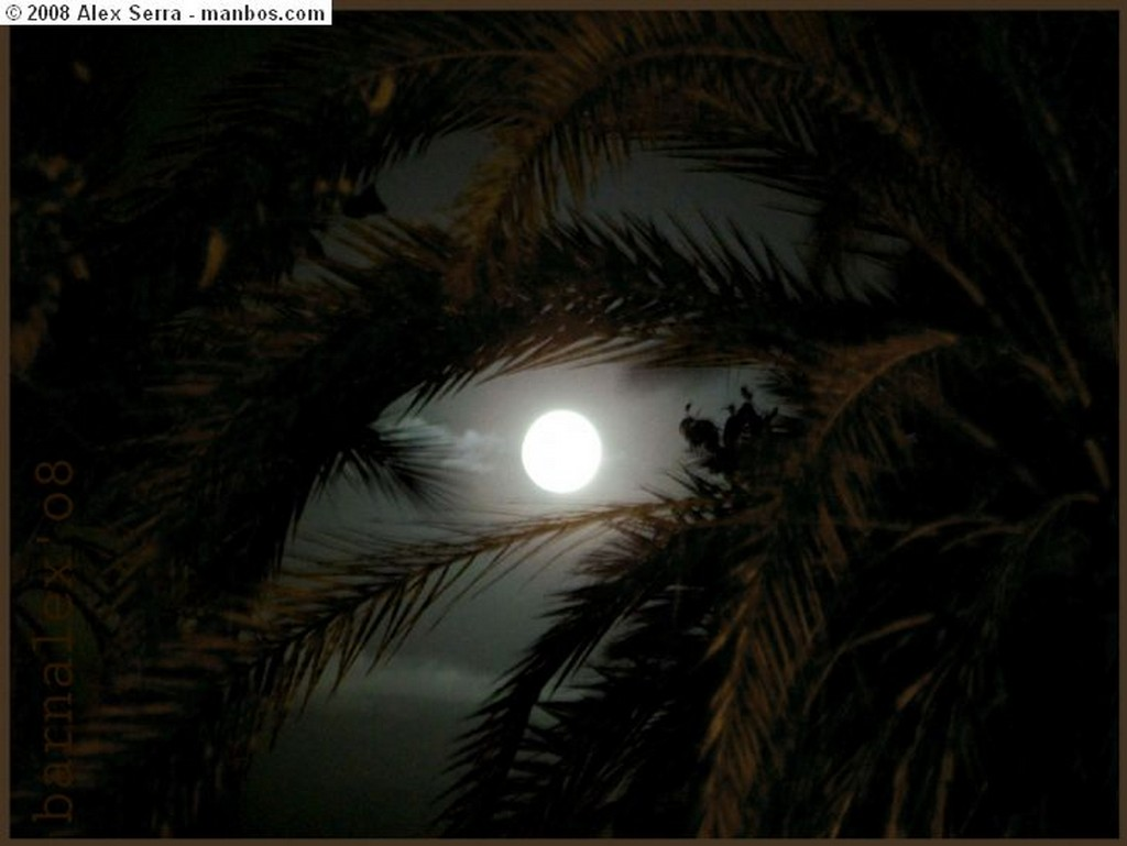 Palermo Busto con luna Llena Sicilia