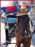 Camara kodak z812is Caballo con sombrero de Paja Alex Serra PALERMO Foto: 17480
