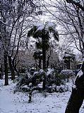 Camara Sony CyberShot DSC-P93 Puertollano nevado Gustavo Merino Machuca PUERTOLLANO Foto: 13828