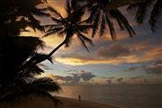Camara Canon EOS-1Ds Mark III Islas Cook  Islas Cook ISLAS COOK  Foto: 20499