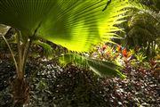 Camara Canon EOS-1Ds Mark III Islas Cook  Islas Cook ISLAS COOK  Foto: 20526
