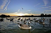Photo of London, Hyde Park, United Kingdom - Patos en Hyde Park