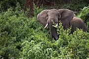 Aberdare, Aberdare, Kenia