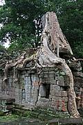 Templo Ta Prohm, Angkor, Camboya