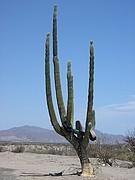 Camara Olympus C310Z Cactus y rueda Carmen del Olmo Aparicio BAJA CALIFORNIA Foto: 10259