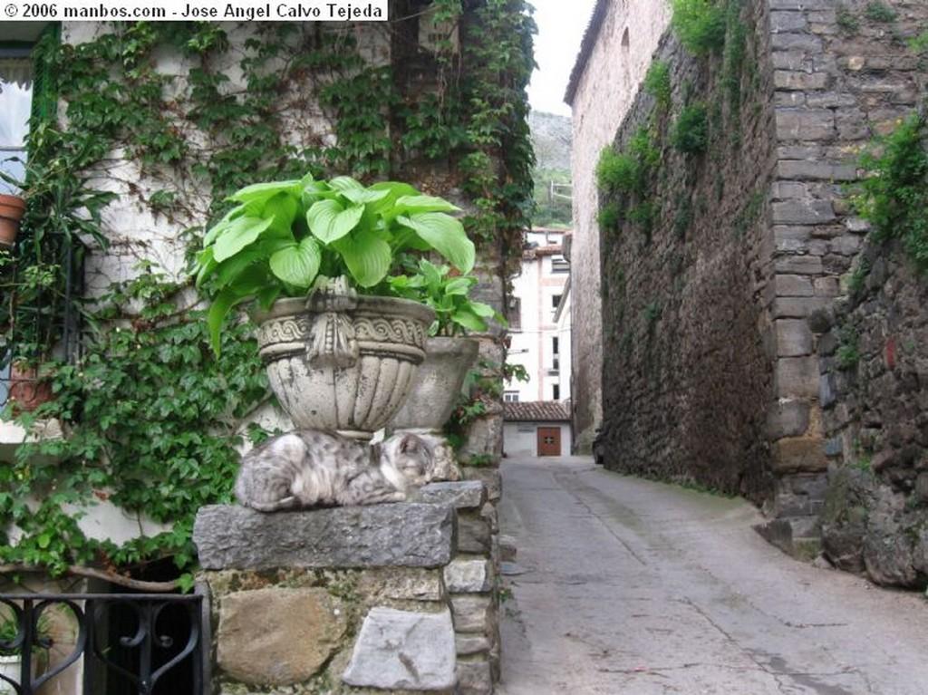 Soto de Cameros el  gato de Soto de Cameros La Rioja