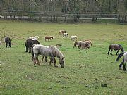Camera Canon PowerShot S80 El Bambi amigo de los caballos Pilar Aragón Gallery OLOT Photo: 14653
