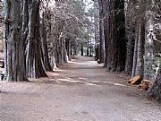 Camera Canon PowerShot S1 IS Bosque de arrayanes Daniel Boero Gallery BARILOCHE Photo: 5641