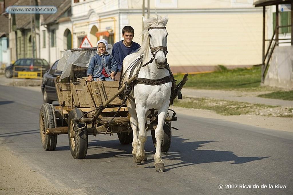Sinaia Transilvania-Paisaje rural Transilvania