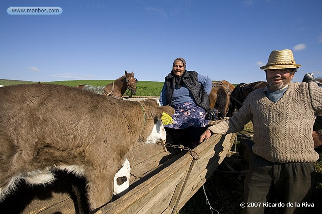 Sinaia Transilvania-Transporte Tradicional Transilvania