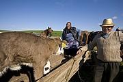 Mercado de ganado, Zau de Campie, Rumania