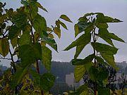 Camera Fujifilm FinePix6800 ZOOM Lluvia de otoño Diego Redolar Ripoll Gallery BELLATERRA Photo: 9420