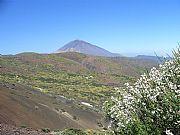 Camara casio Teide con retama en flor Juan Carlos García TENERIFE Foto: 9862