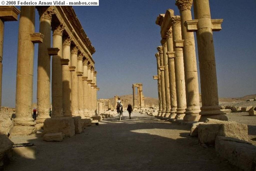 Palmira la luna sobre Palmira Palmira