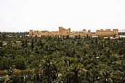 Camara Canon EOS 350D DIGITAL Oasis de Palmira Federico Arnau Vidal PALMIRA Foto: 17426