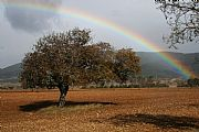 Camera Canon EOS 350D DIGITAL Otoño en Ordesa Federico Arnau Vidal Gallery ORDESA Photo: 21613