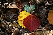 Camera Canon EOS 350D DIGITAL Otoño en Ordesa Federico Arnau Vidal Gallery ORDESA Photo: 21617