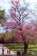 Camera Fuji E 500 El Árbol del Amor aurelio oller ortega Gallery SAN LORENZO DE EL ESCORIAL Photo: 27397