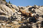 Camara Canon Eos 5D Sarrio en Monte Sensa Francisco Sesé ORDESA Foto: 15169