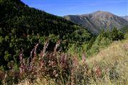 Camara Canon EOS-1Ds Mark II Parque Natural de la Vall de Sorteny Andorra ANDORRA Foto: 32219
