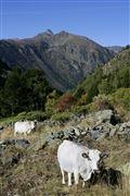 Camara Canon EOS-1Ds Mark II Parque Natural de la Vall de Sorteny Andorra ANDORRA Foto: 32213