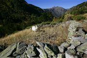 Camara Canon EOS-1Ds Mark II Parque Natural de la Vall de Sorteny Andorra ANDORRA Foto: 32212