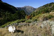 Camara Canon EOS-1Ds Mark II Parque Natural de la Vall de Sorteny Andorra ANDORRA Foto: 32211