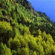Camara 0 Pic del Brossos poblado de hayas pinos y abetos Andorra ANDORRA Foto: 32195