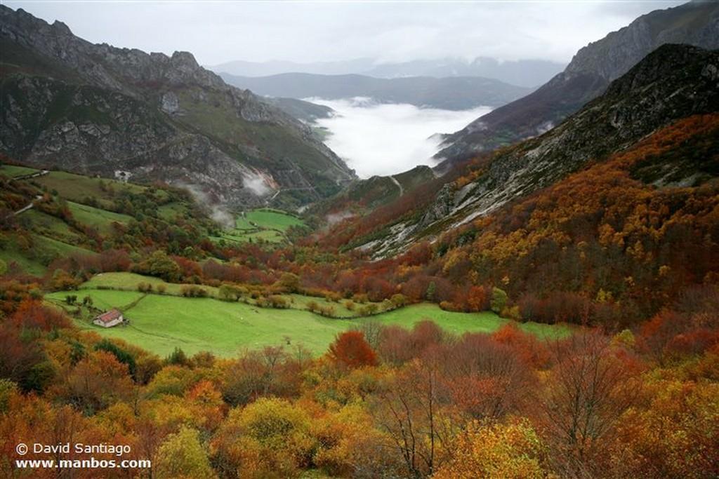 Valle de Huerna Vacas en el Valle del Huerna - asturias Asturias