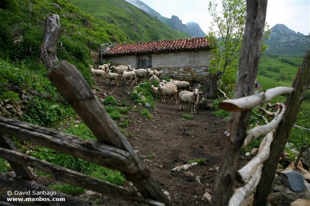 Tuiza de Arriba Tuiza de Arriba - asturias Asturias