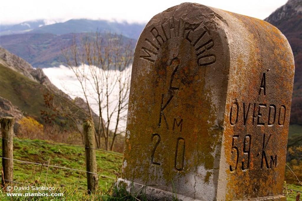 Ciervos Ciervos Asturias