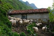 Camara Canon EOS 5D Tuiza de Arriba - valle del Huerna - asturias Asturias TUIZA DE ARRIBA Foto: 31674