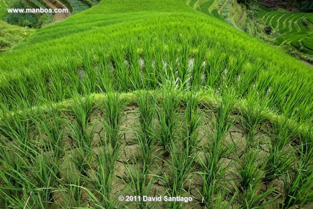 Guangxi Rice Field La Columna del Dragon  guangxi  ping´an China Guangxi