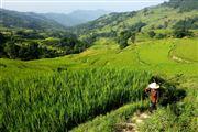 Camara Canon EOS 5D Mark II Terraced Fields In Yuanyang China El Gran Sur de China YUANYANG Foto: 27922