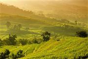 Camara Canon EOS 5D Mark II Terraced Fields In Yuanyang China El Gran Sur de China YUANYANG Foto: 27851