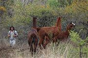 Foto de Cordoba, Argentina  - Llamas