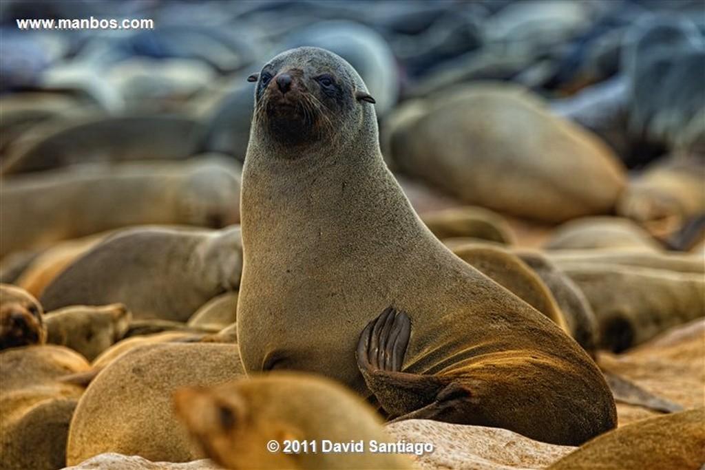 Namibia Namibia Cape Cross Seal Reserve  Namibia