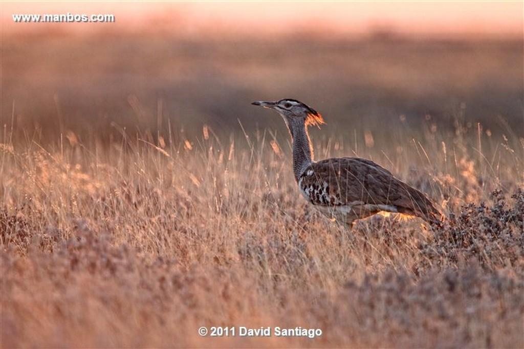 Namibia Namibia Acacia Al Atardecer  Namibia