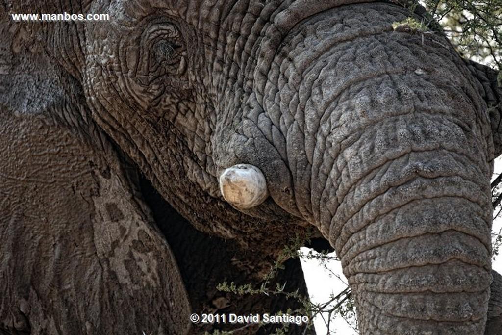 Namibia Namibia Elefante  african Elephant  loxodonta Africana  Namibia