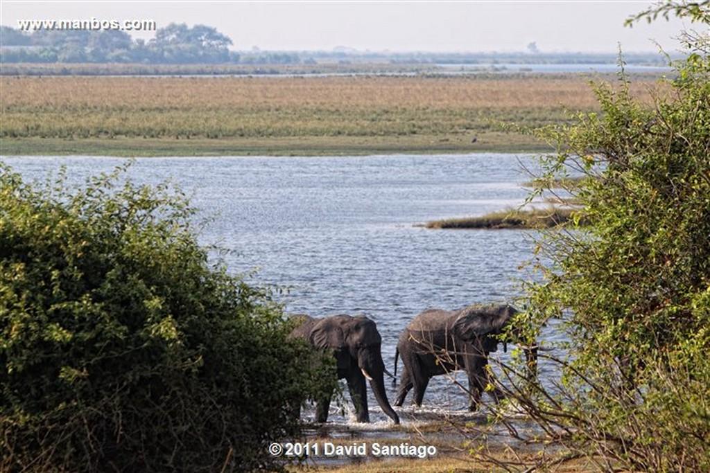 Botswana Botswana Impala  aepyceros Melampus  Botswana