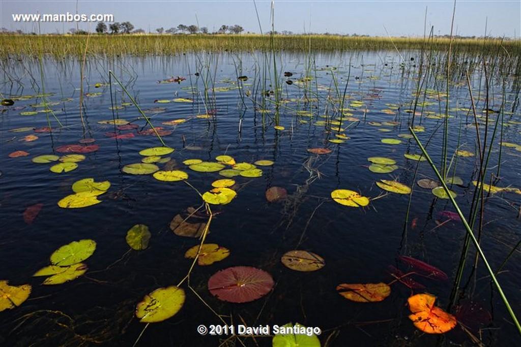 Botswana Botswana Parque Nacional Delta del Okavango  Botswana